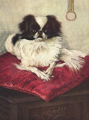 Japanese Chin Charming Dog Greetings Note Card Beautiful Dog On Red Cushion
