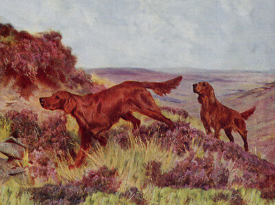 Irish Setter Charming Dog Greetings Note Card Two Dogs In The Heather
