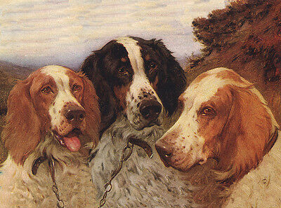 Irish Red And White Setter Dog Greetings Note Card Three Beautiful Dogs