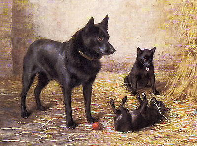 Schipperke Mother And Puppies Charming Dog Greetings Note Card
