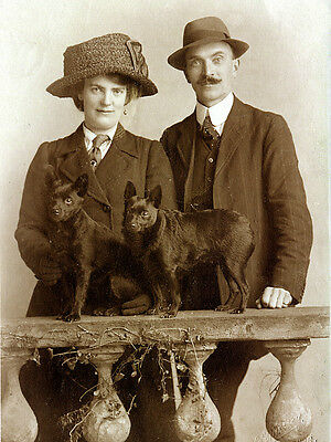 Schipperke Charming Dog Greetings Note Card Lady And Man With Two Dogs