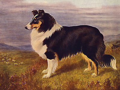 Rough Collie In Rural Scene Lovely Dog Greetings Note Card