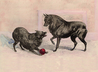 Schipperke Charming Dog Greetings Note Card Two Dogs Play With Ball