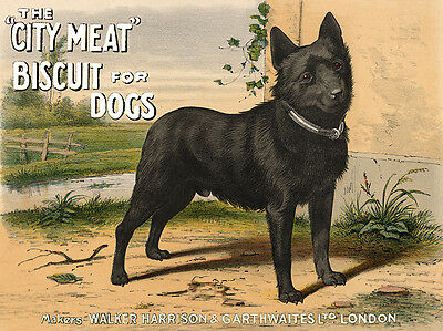 Schipperke Charming Dog Greetings Note Card Standing Dog On Dog Biscuit Advert