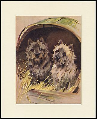 Cairn Terrier Two Little Dogs In A Barrel Mounted Dog Art Print Ready To Frame