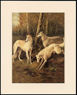 Borzoi Dogs Chase Rabbit Lovely Dog Art Print Mounted Ready To Frame