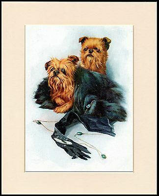Brussels Griffon Two Little Dogs Charming Dog Print Mounted Ready To Frame