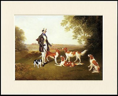 Irish Red And White Setter Lovely Dog Print Mounted Ready To Frame
