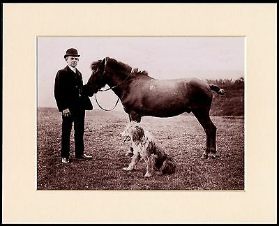 Bearded Collie Young Lad With Horse And Dog Mounted Photo Print Ready To Frame
