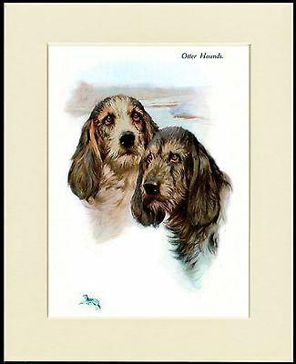 Otterhound Dogs Head Study Lovely Dog Print Mounted Ready To Frame