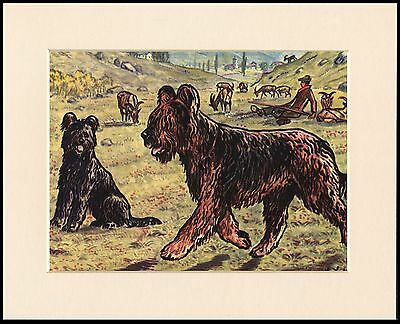 Briard Dogs Guarding Livestock Lovely Dog Print Mounted Ready To Frame