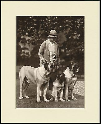 Mastiff Lady And Her Dogs Great Dog Photo Print Mounted Ready To Frame