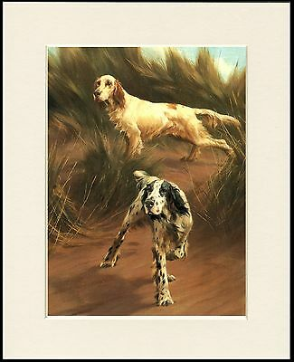 English Setter Dogs Lovely Dog Print Mounted Ready To Frame