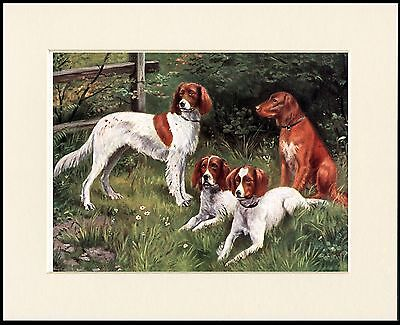 Irish Red And White Setter Dog Group Lovely Print Mounted Ready To Frame