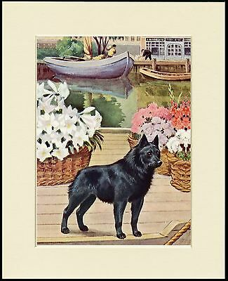 Schipperke Little Dog On A Barge Lovely Print Mounted Ready To Frame