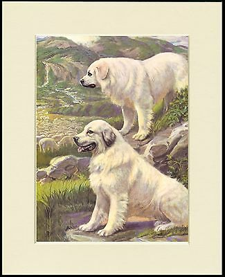 PYRENEAN MOUNTAIN DOG DOGS GUARDING FLOCK LOVELY PRINT MOUNTED READY TO FRAME