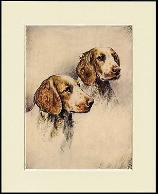 WELSH SPRINGER SPANIEL SLEEPING CHARMING DOG PRINT MOUNTED READY TO FRAME