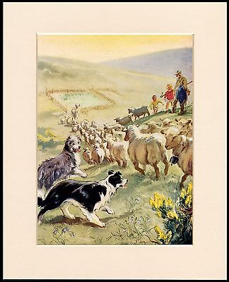 Bearded And Border Collie Dogs At Work Charming Dog Print Mounted Ready To Frame