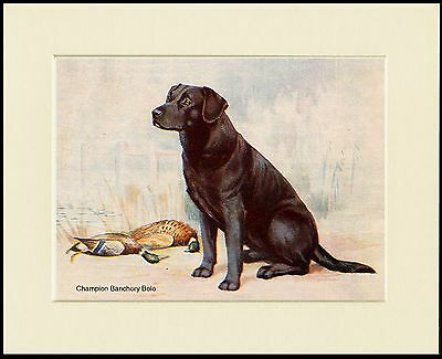 Labrador Retriever Lovely Little Dog Print Named Dog Mounted Ready To Frame
