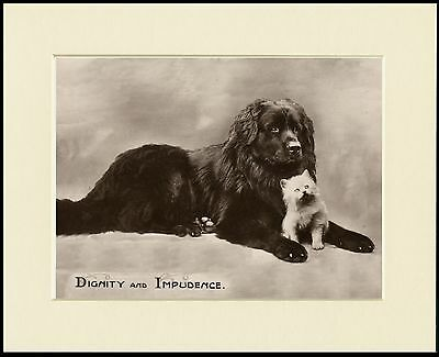 Newfoundland Big Dog And Cute Kitten Charming Dog Print Mounted Ready To Frame