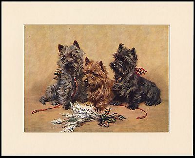 Cairn Terrier Dogs And White Heather Lovely Mounted Dog Print Ready To Frame
