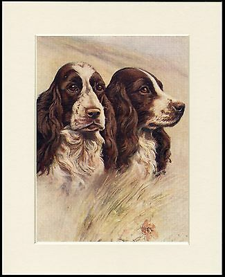English Springer Spaniel Two Dogs Head Study Dog Print Mounted Ready To Frame