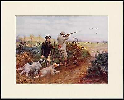 English Setter Two Dogs Men Shooting Little Dog Print Mounted Ready To Frame