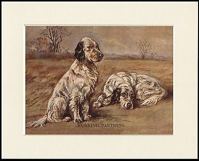 """English Setter Dogs """" Working Partners """" Lovely Dog Print Mounted Ready To Frame"""