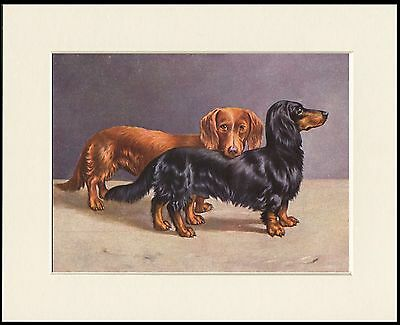 Dachshund Two Long Haired Dogs Charming Dog Print Mounted Ready To Frame
