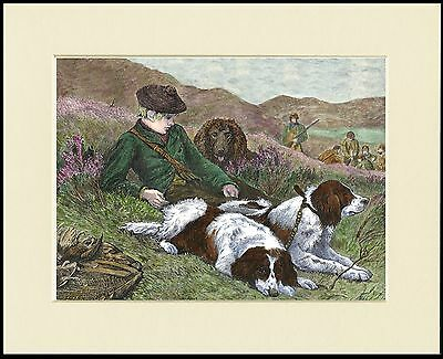 English Springer Spaniel And Scots Lad Dog Print Mounted Ready To Frame