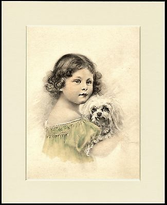 Maltese Dog And Little Girl Charming Print Mounted Ready To Frame