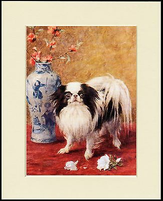 Japanese Chin And Vase Of Flowers Lovely Dog Print Mounted Ready To Frame