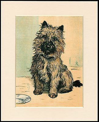 Cairn Terrier Lovely Little Sitting  Dog Print Mounted Ready To Frame