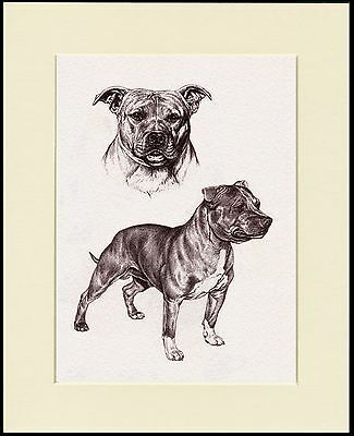 Staffordshire Bull Terrier Dog Sketch Print Mounted Ready To Frame