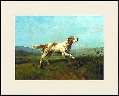 Irish Red And White Setter Lovely Little Dog Print Mounted Ready To Frame