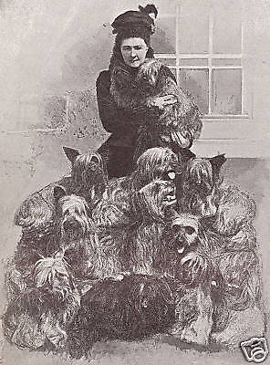 Skye Terrier Lady And Dogs Lovely Little Dog Print