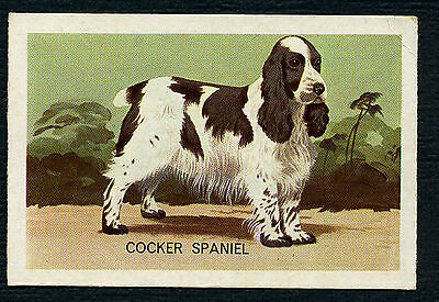 COCKER SPANIEL SHELL OIL PETS SERIES AUSTRALIAN DOG TRADE CARD FROM 1964