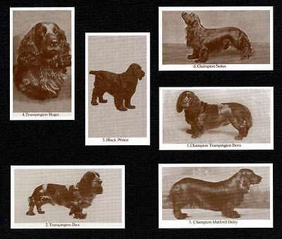Field Spaniel Dogs Of Yesteryear Set Of 6 Named Dog Photo Trade Cards