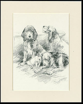 Otterhound Dogs And Jack Russell Terrier 1936 Kf Barker Dog Print Ready Mounted
