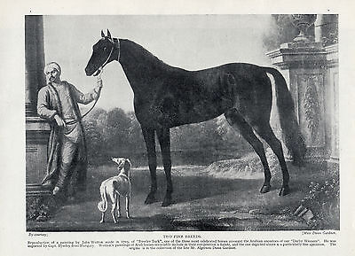 Saluki  And Arabian Horse Lovely Old Original Dog Print From 1935