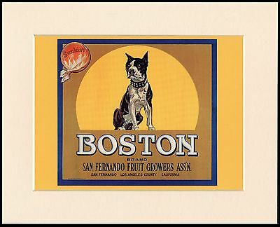 Boston Terrier Lovely Dog Advert Print Mounted Ready To Frame