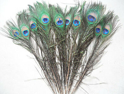 50 pcs Beautiful natural peacock tail feathers,about 10-12 inch