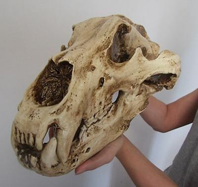 Collection of home furnishing boutique resin polar bear skull model 1: 1