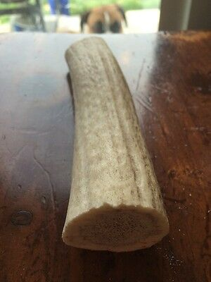 One Medium  Elk Antler Dog Chew / Also Great Piece  For Knife Or Ither Craft