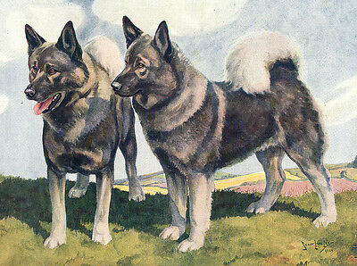 Elkhound Charming Dog Greetings Note Card Two Beautiful Standing Dogs