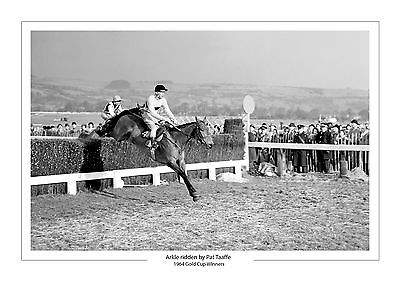 Arkle Ridden By Pat Taaffe 1964 Gold Cup Horse Racing  A4 Print Photo Cheltenham