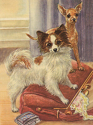Papillon & Chihuahua Charming Dog Greetings Note Card Two Beautiful Dogs