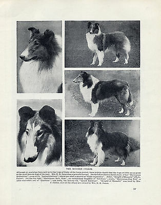 Rough Collie Various Images Named Dogs Old Original Dog Print Page From 1934