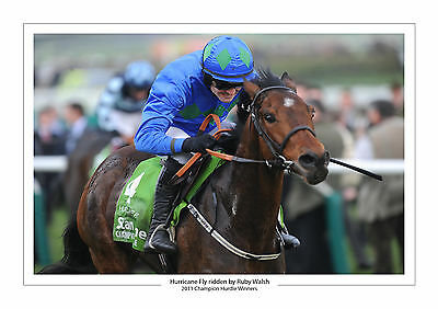 Hurricane Fly Ruby Walsh Champion Hurdle 2011 Horse Racing A4 Photo Cheltenham 2