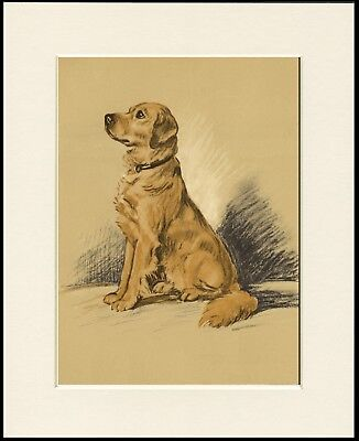 Golden Retriever Seated Dog Lovely Dog Print Mounted Ready To Frame